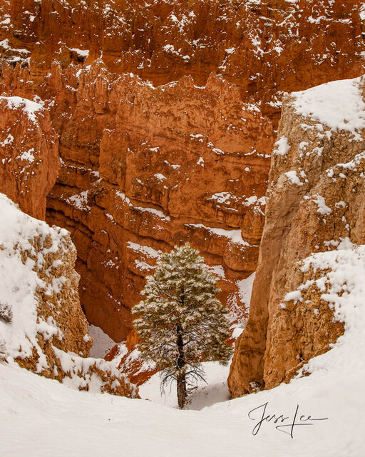 A lone tree stands amongst the rock formations of Bryce Canyon National Park