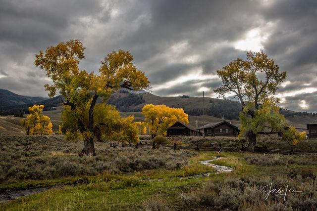 Buffalo Ranch