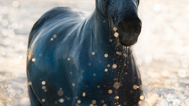 Camargue Horse in Bokeh Photo FPW_1339