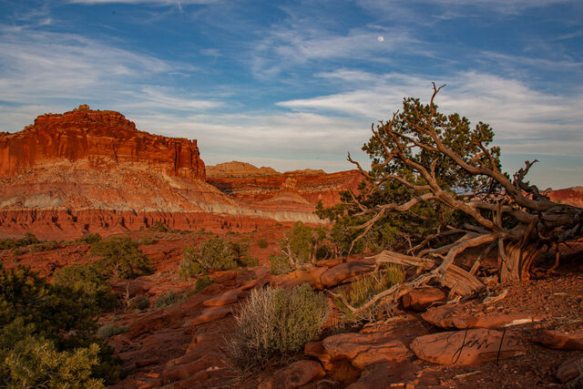 My photographs of Capitol Reef and the area are available for you to purchase as Fine Art Prints or Wall Art for that special place in your home or office.