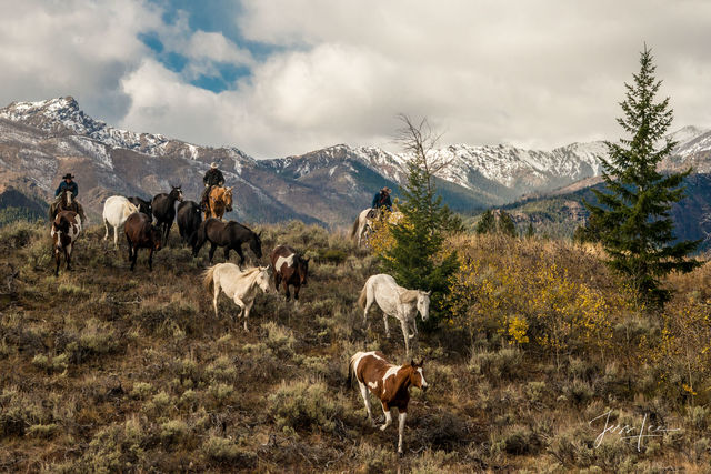 picture of horse round up in Wyoming, photo of cowboys, Jackson Hole, Grand Tetons, equine photography, wild horses, nature, wilderness, farm, cowboy, western, large format, cowgirl, ranch, museum, fi