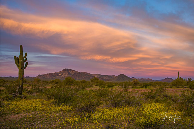 Arizona Desert Landscape Bloom Sunrise