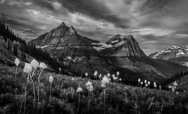 black and white mountains and bear grass from Glacier National Park