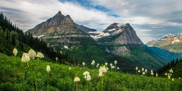 bear grass, glacier, national park, Montana, spring,