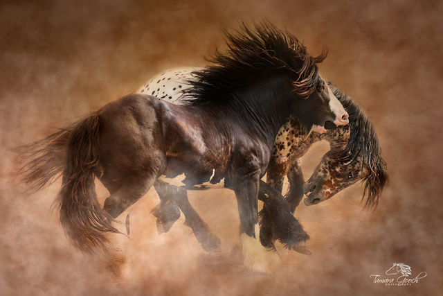 Cowboys  Horse & Western Americana Photography | Fine Art Limited Editions by Jess Lee