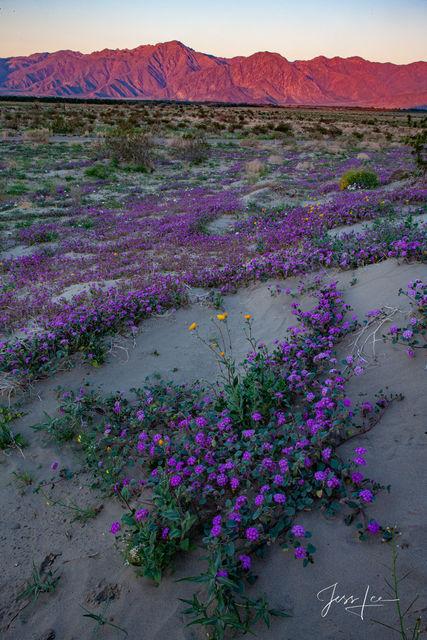 Spring has sprung in the Mojave Desert in California