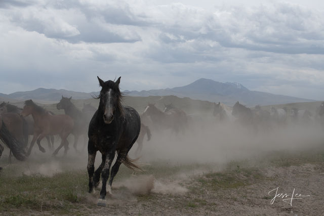Wild Horse Photography Workshops