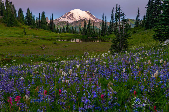photo of Tipso Lake in Washington, Tipso Lake print, photo of Washington lake, Washington, Mount Rainier, lupines, flowers, photography in mountains, PNW, Pacific Northwest, flowers, summer in Washing