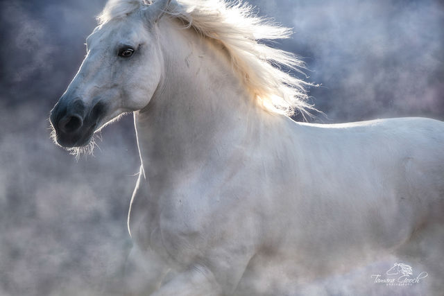 Fine Art Horse Photography Prints for Sale | Equine images by Tamara Gooch