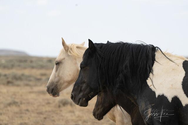 Mon, Dad, Foal