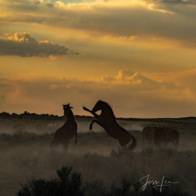 Sundown Fury | Stallions at play
