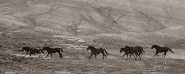 Wild horse photography, mustang, photos, prints, wall art,