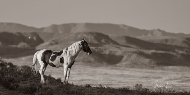 photo of wild horse in Wyoming, Mustang photography, horse photos, equine, paint, landscape, wilderness, nature, desert, black and white photography, western, ranch, fine art prints