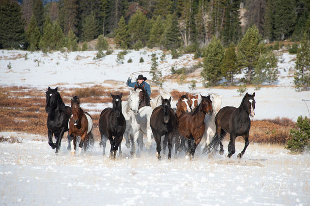 picture of horses galloping in snow, Wyoming photography, Jackson Hole, horse round up, roping, farm, cowboy, western, Large format, cowgirl, ranch, museum, fine art, print, jess lee, artist, photogra