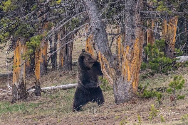 Photographing Yellowstone with jessleephotos.com Photo tour