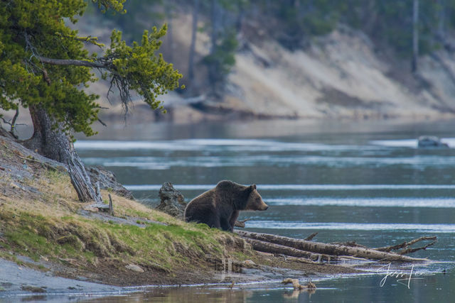 Yellowstone, Grand Teton Photography Tours Private and Group Workshops