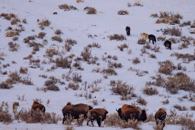 Photographing Yellowstone with jessleephotos.com tour