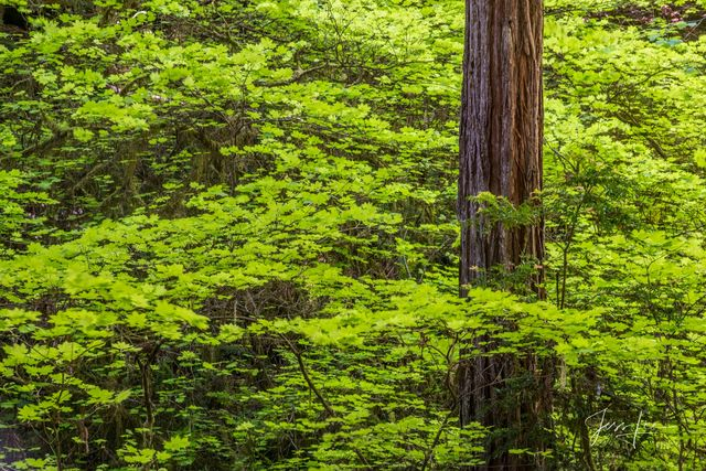 Trees and Forest Landscape photography Prints