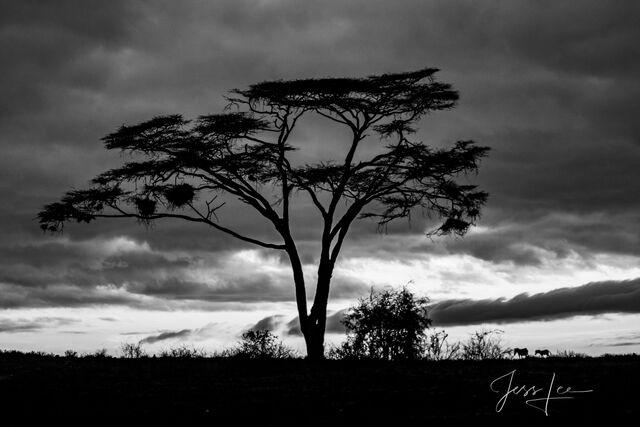 Kenya Twlight