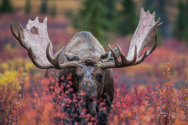 World Wide Collectors Favorite Wildlife Photography Prints By Jess Lee