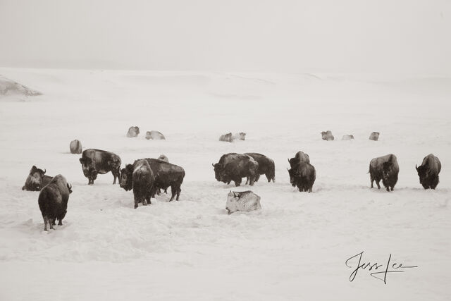 yellowstone, winter, 07, snow, national park,