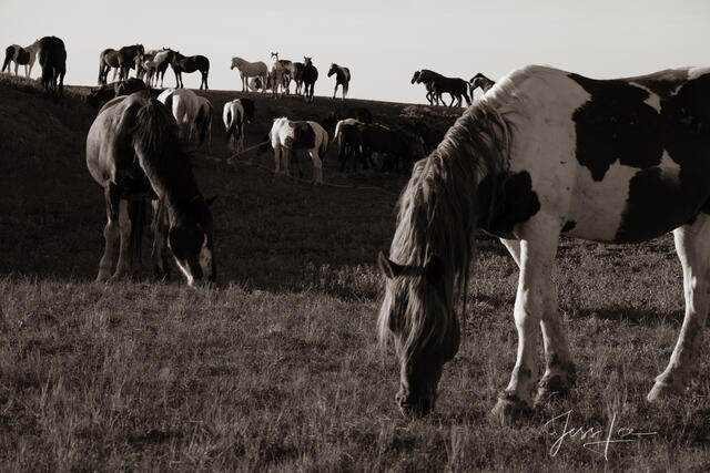 Grazing time