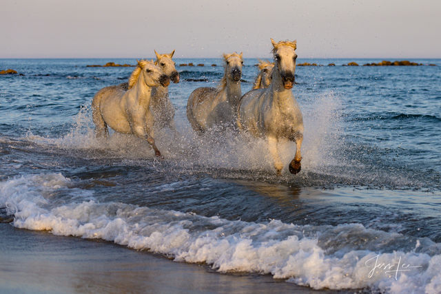 Surfing-horses