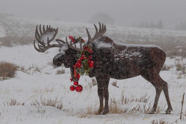 Moose Bells