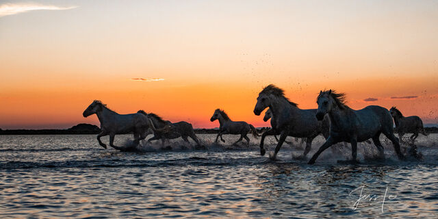 Horses of Camargue, Provence France 11