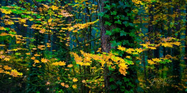 Fall Metamorphosis