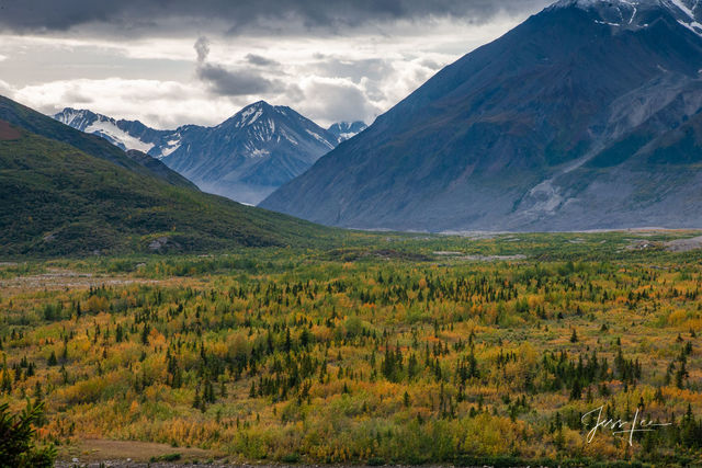 Evergreens sprawl out over Alaska's Brooks Range.  Fall brings new color to the landscape.