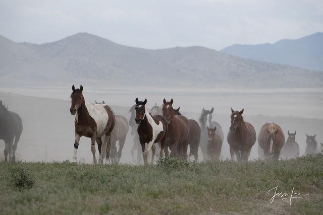 Onaquai Herd
