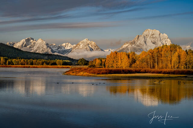 Geese landing in the Snake River at Oxbow Bend.