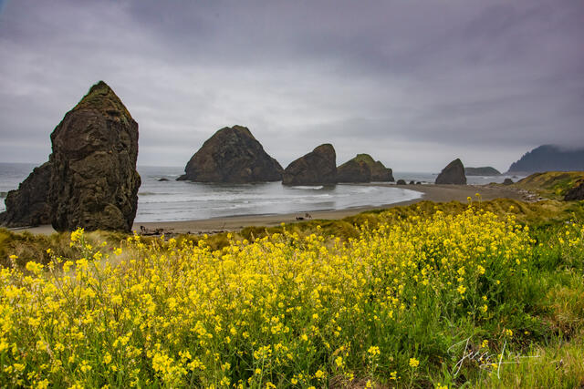 Flowers on the Coast at Pistol River