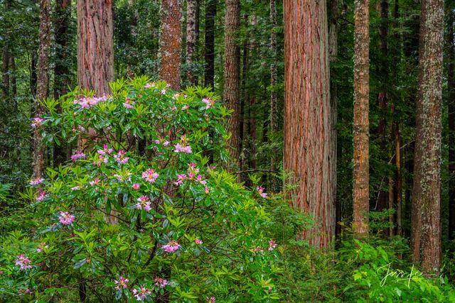 california,  beach, ocean, waterfall, trees, water, redwoods,