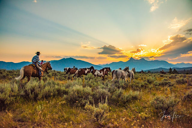 Heading for Sunset | Cowboy herding horses home