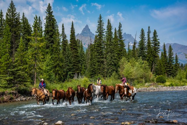 River Crossing | cowboys moving horse herd across river