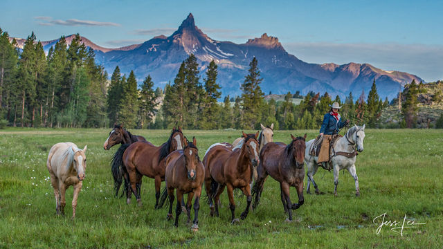 Wyoming Summer | Cowgirl and Horses under the Beartooth Mountains