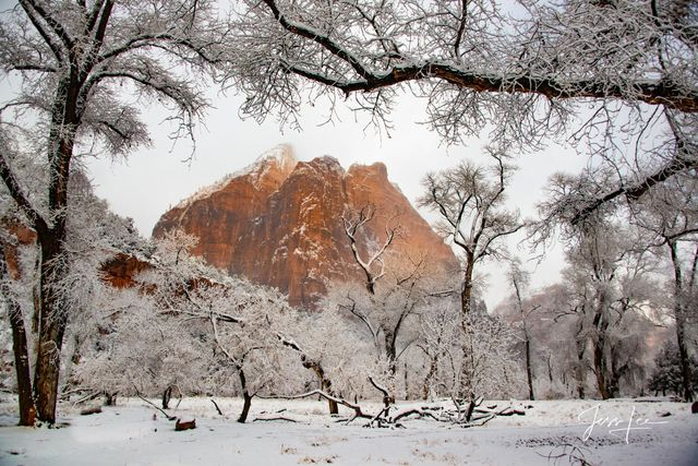snow, utah, winter, zion, zion national park, Large format, quality, museum, fine art, print, jess lee, artist, western, cowboy, photographer, limited edition, high quality, high resolution, beautiful