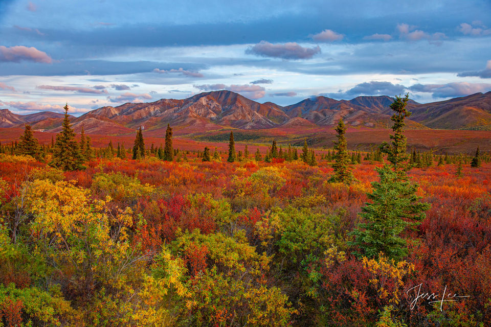 Autumn colors creeping in over Denali National Park's landscape.