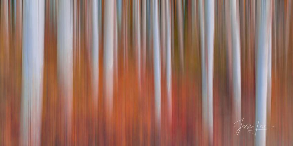 Heat | Aspen Tree Blur