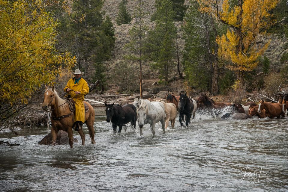 Cowboy leading horses across the river with a soft autumn rain