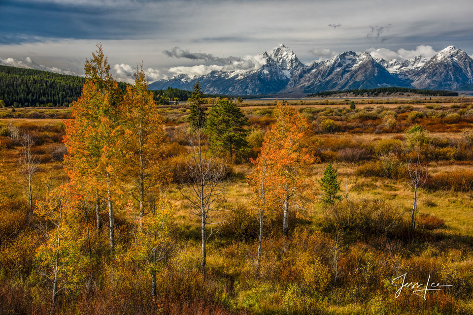 Picture of Autumn in the Tetons