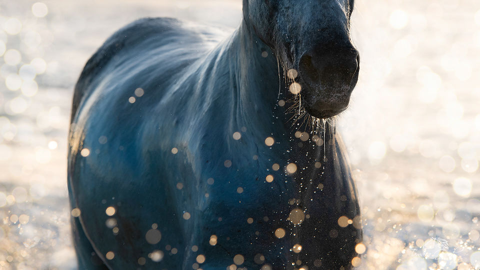 Camargue Horse in Bokeh Photo FPW_1339
