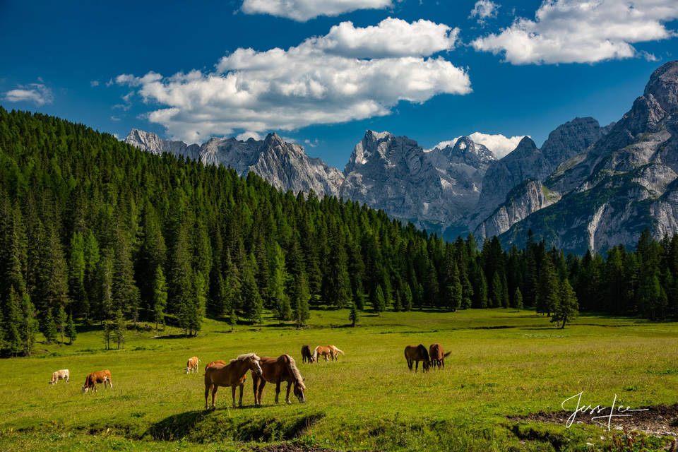Dolomites, Haflinger, Italy, mountains, horses, rugged, fine art, limited edition, tyrol, jess lee, artist, western, cowboy, photographer, high quality, high resolution, beautiful, artistic, landscape