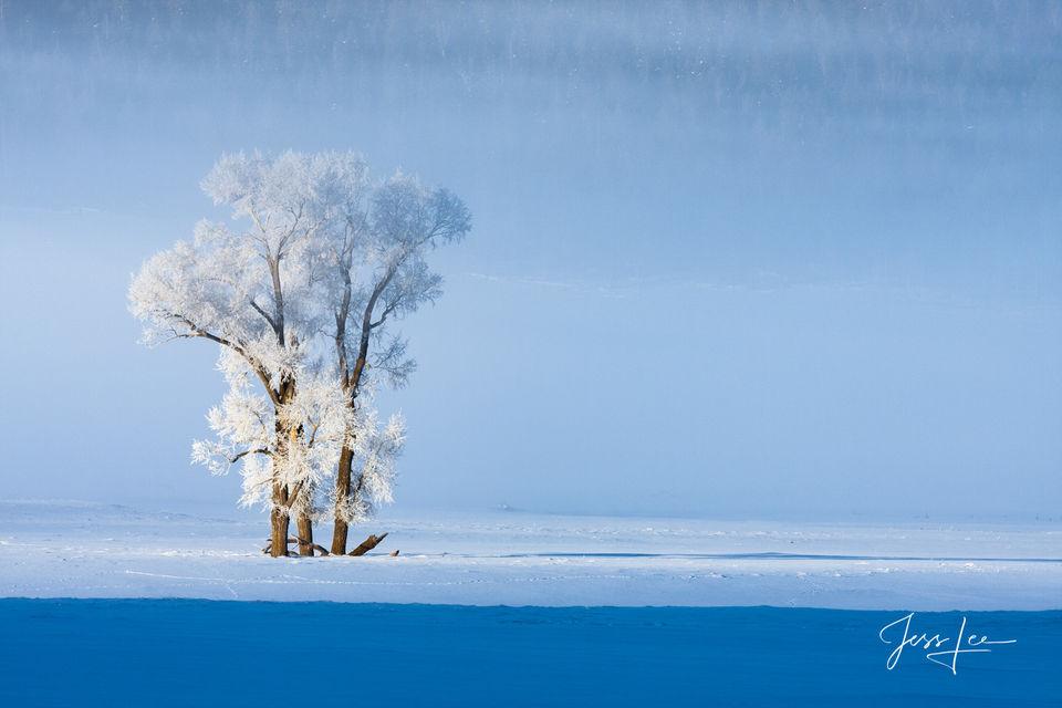 Frosty Pair