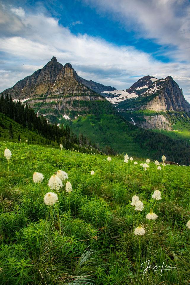 Bear Grass Meadows
