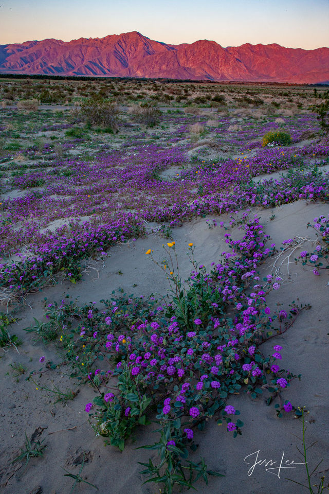 Mojave, spring, flowers, yosemite, mountains, desert, death valley, ocean,
