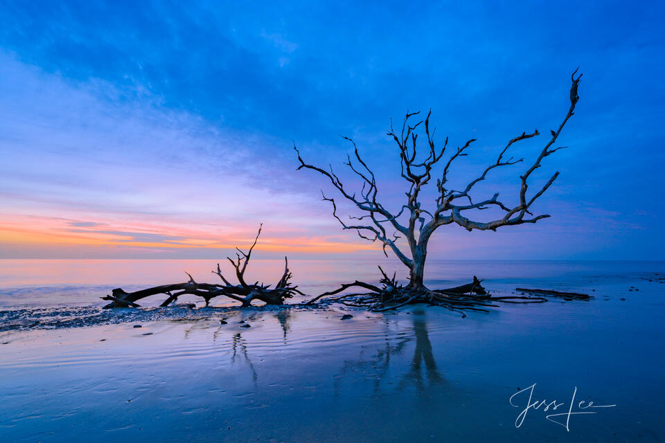 Jekyll Morning, dead trees.
