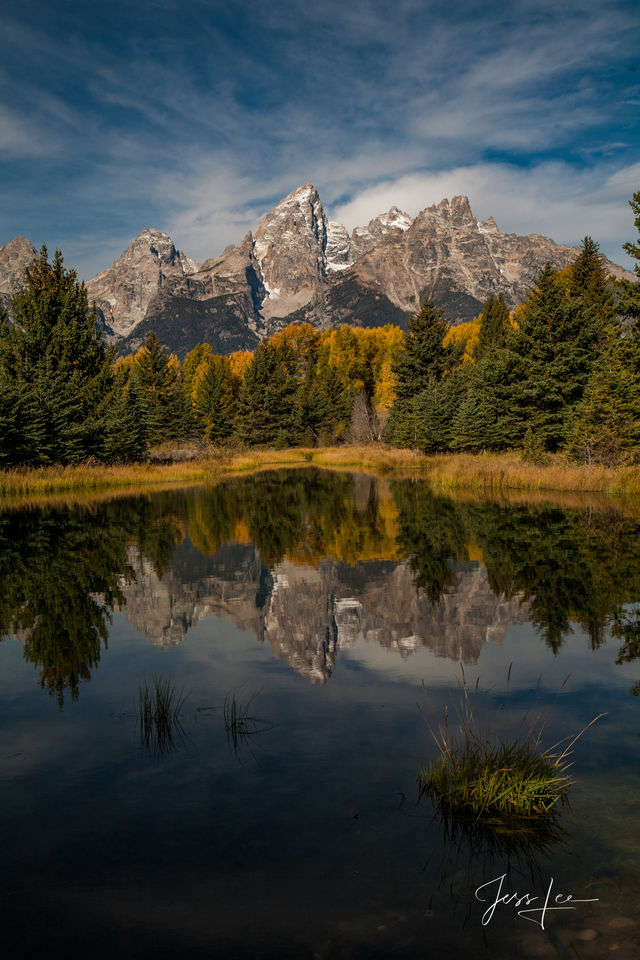 Grand Teton, Tetons, autumn, color, fall, mountains, national park, wyoming, bears, wolves, wildlife, snow, trees, cowboy, western, Large format, cowgirl, ranch, museum, fine art, print, jess lee, art